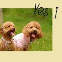 情侣狗狗可爱QQ头像 专属狗狗们的浪漫