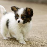 网友原创拍摄自家狗狗QQ头像图片 送给那些爱狗人