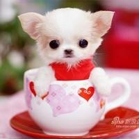 网友原创拍摄自家狗狗QQ头像图片 送给那些爱狗人士