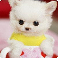 超可爱的QQ狗狗头像 各种品种各种混搭