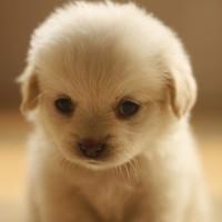 家养的超可爱宠物狗狗头像图片