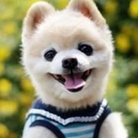 俊介君卡哇伊QQ头像(十二张)