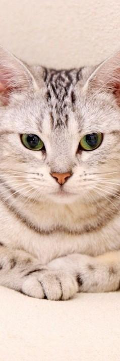 可爱喵星人365投注平台皮肤365体育投注平板 萌猫咪看我的