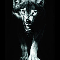 QQ狼头像图片大全_凶狠的是狼