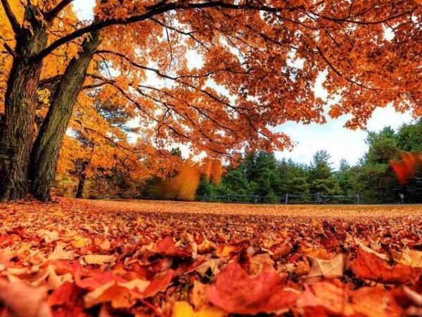 秋天的枫叶图片图片