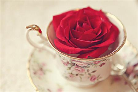 非主流玫瑰花伤感图片