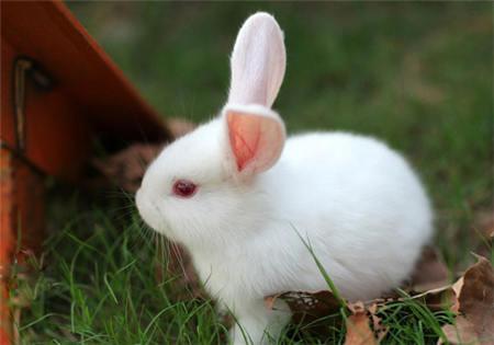 小白兔图片大全可爱