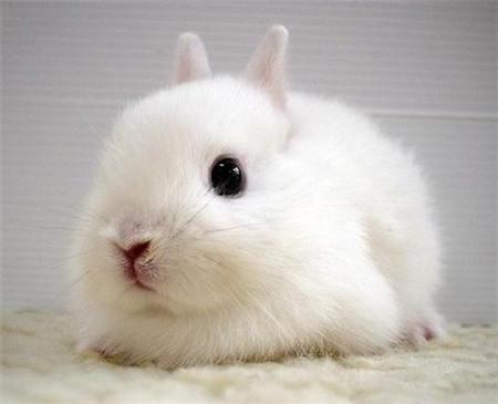 小白兔图片大全可爱(2)