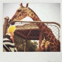 qq可爱长颈鹿头像大全