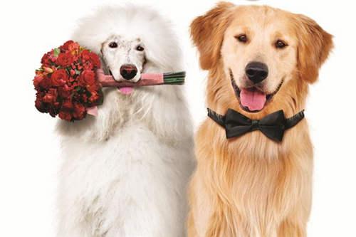 给狗带牛的名字_狗狗结婚图片,超可爱的狗狗结婚照