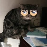 戴眼镜的猫咪头像