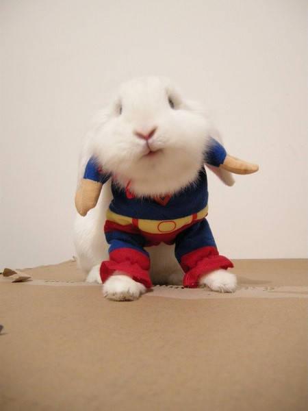 穿超人制服的可爱动物图片