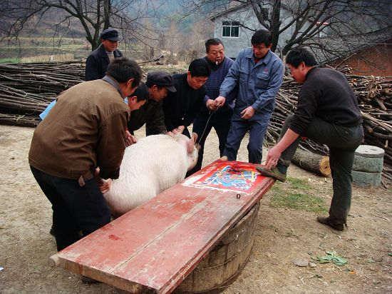 农村杀猪图片,新年农村杀猪图片大全
