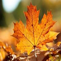 好看的秋天落叶QQ头像唯美范儿