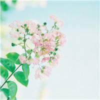 唯美好看的微信花朵�^像