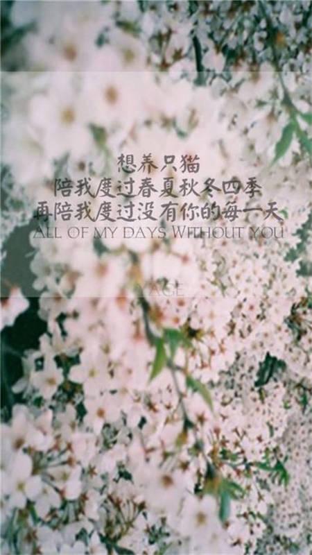 以花朵为背景的唯美文字图片
