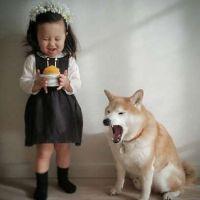 萌娃与柴犬的可爱搞笑365投注平台头像