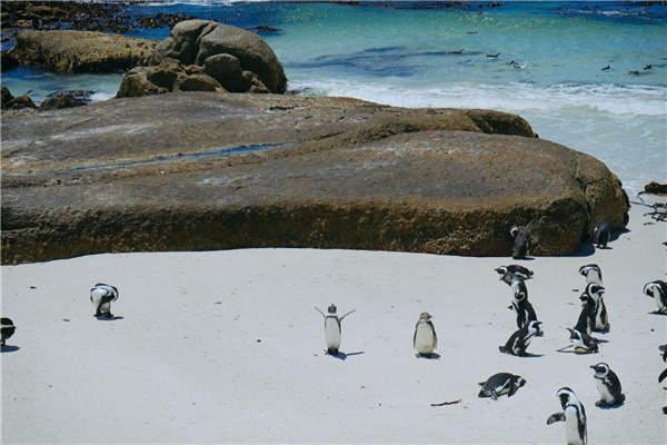 可爱的南极企鹅图片