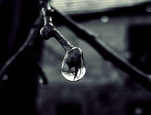 孤独的水滴图片唯美