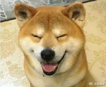 柴犬表情包图片搞笑可爱
