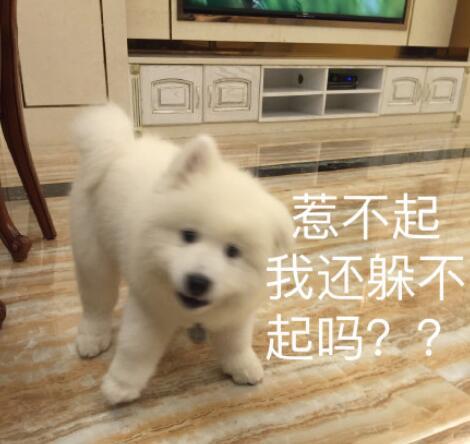 �_摩耶�u萌可�郾砬榘��D片�ё值�