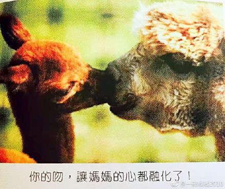 关于动物们的母亲节感人图片