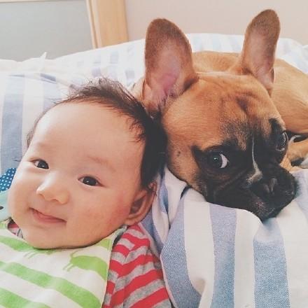 宝宝和斗牛犬的幸福生活图片