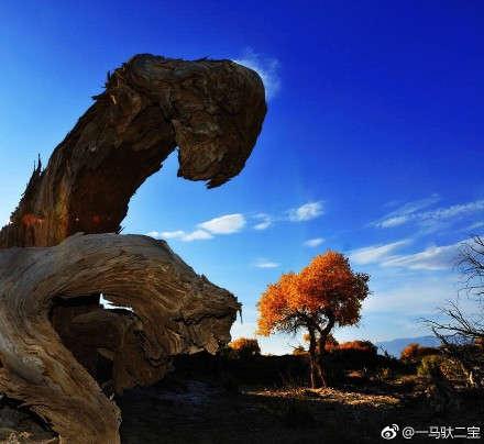 唯美好看的沙漠枯树图片
