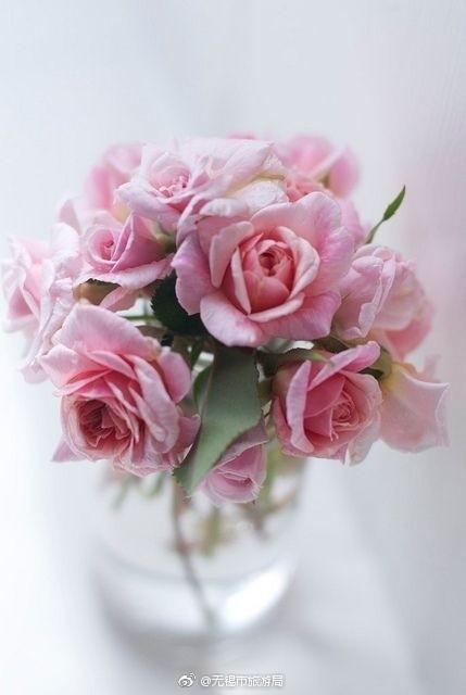 放在花瓶里的花图片