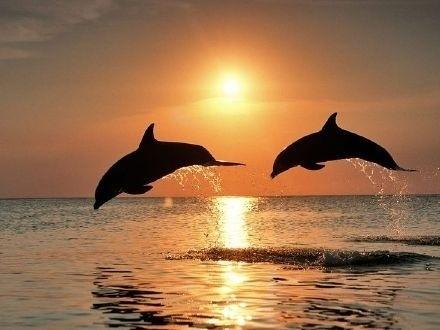 海豚跳�S�D片